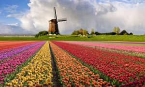 Виза в Нидерланды: виды виз и необходимые документы, стоимость, сроки оформления, сроки действия и причины для отказа